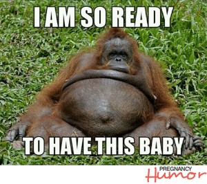 http://pregnancyhumor.com/blog/2015/04/13/10-funny-pregnancy-memes-featuring-animals/
